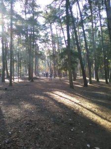 Doorheen het mooie Dommelhofpark !